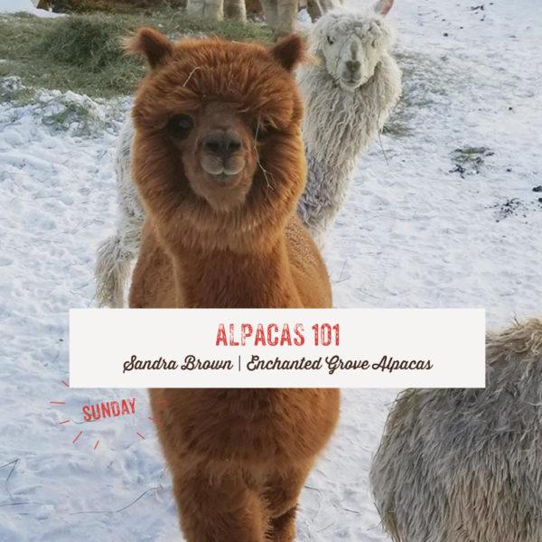Alpacas 101