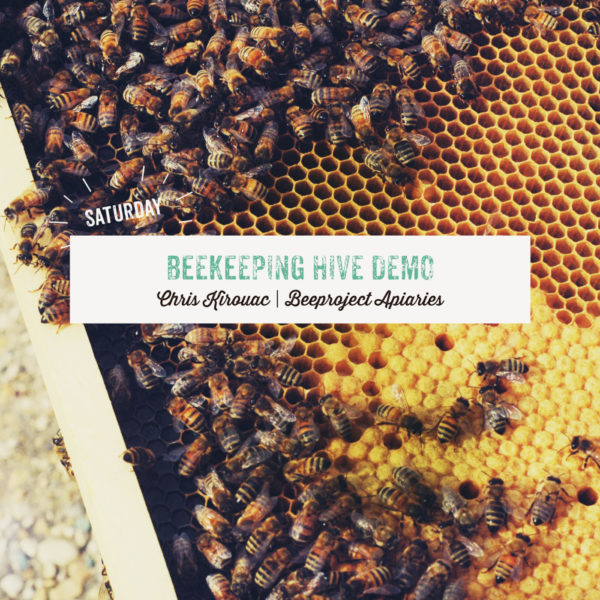Beekeeping Hive Demo