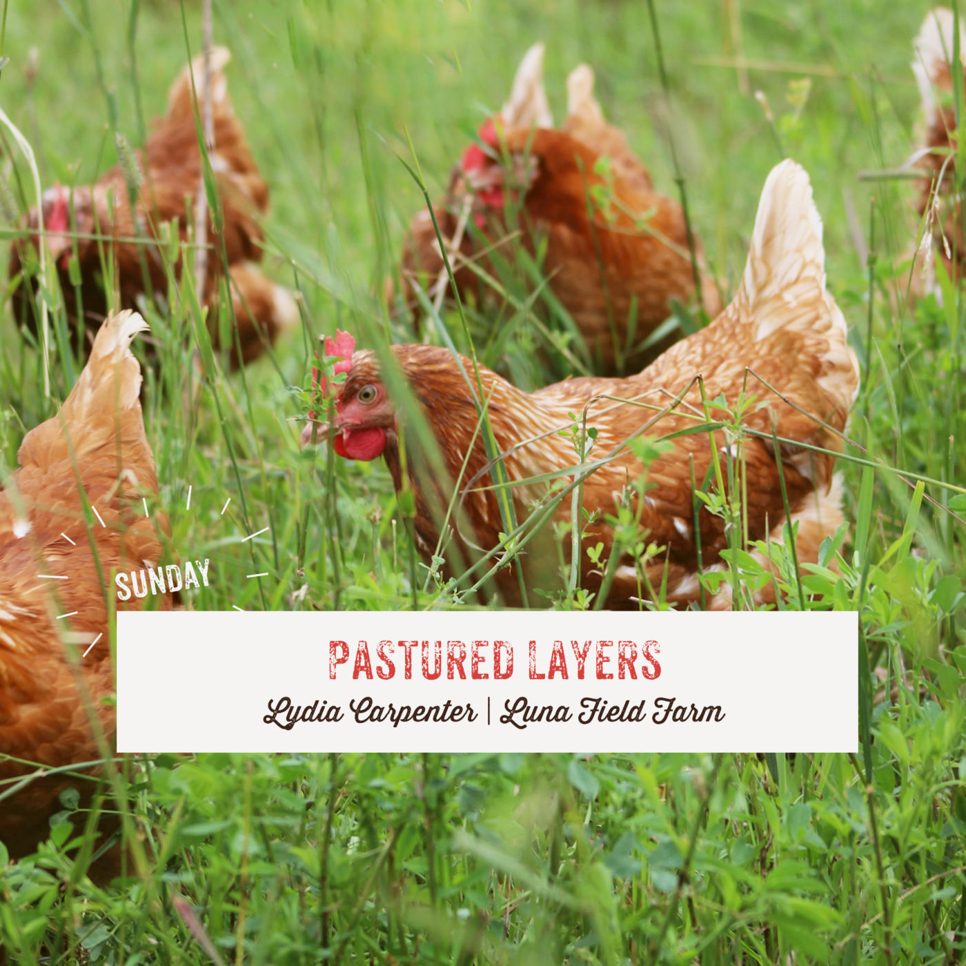 Pastured Layers
