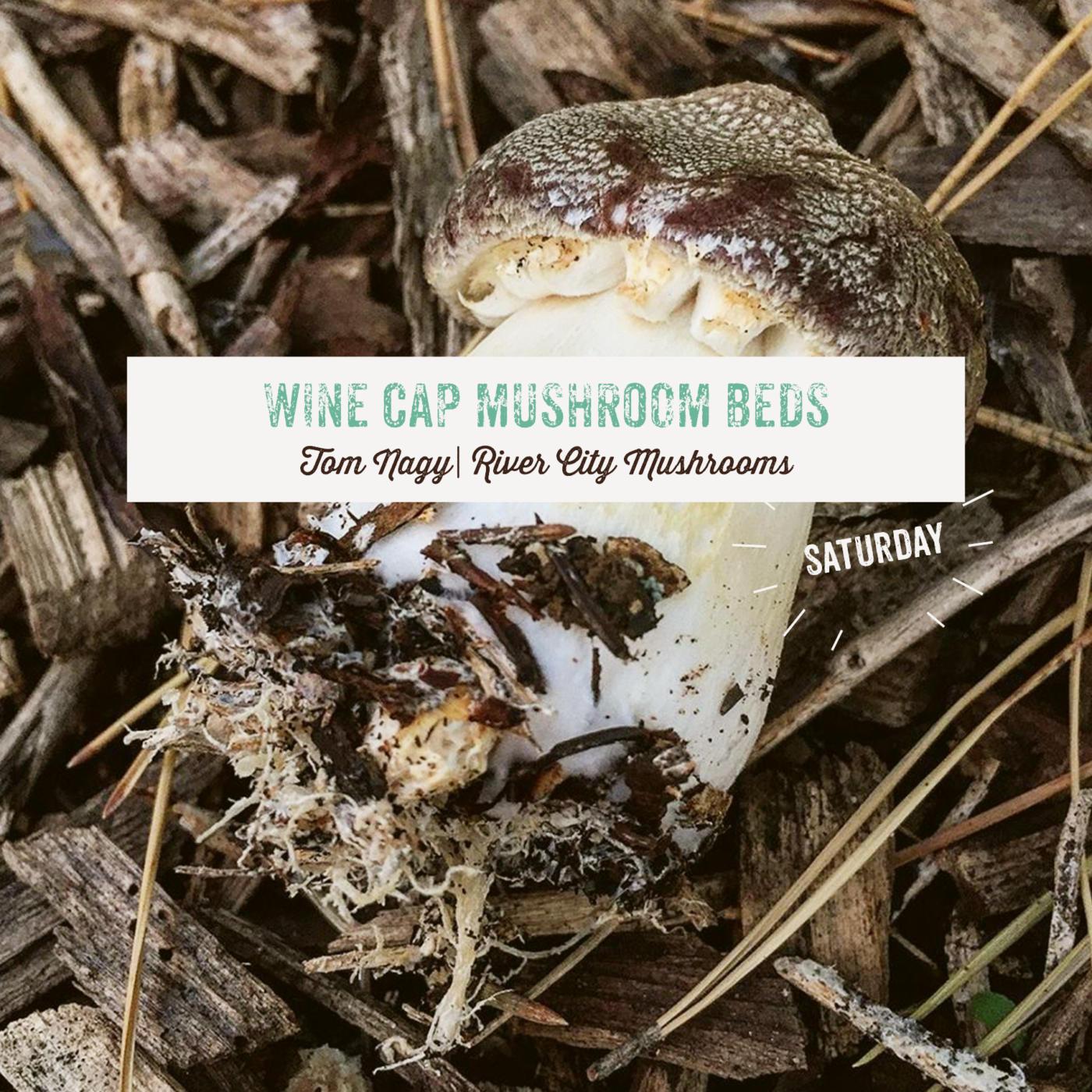 Wine Cap Mushroom Beds